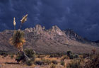 Mammalata clouds and old Elata Yucca, western foothills of Organ Mountains.