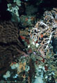 A number of marine invertebrates, among them deep-water Soft Coral, a Gorgonian Fan, and white Sponges,  Isla Champion, Islas Galápagos, Ecuador