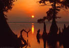 Reelfoot Lake sundown with cypresses, western Tennessee.