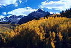 A beautiful sweep of aspen, and in the distance Mount Sneffels, from the road to East Dallas Creek.