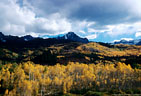 Aspens in fall colors in Beaver Creek Valley, from Ouray County Road 7.